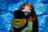 Экс-руководителя Приморского океанариума будут судить за гибель животных