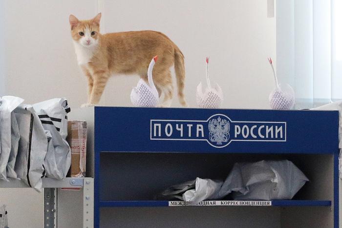 «Почта России» раскроет для пограничников содержимое посылок