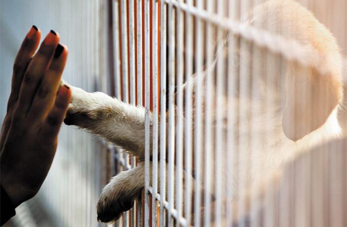 Рассмотрение законодательного проекта озащите животных перенесено наосень