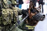 По всей России продолжилась массовая эвакуация после звонков о минировании. Обобщение