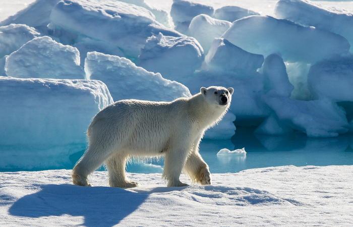 Прокуратура заставит восстанавливать популяции рыб за выброс отходов в Арктике