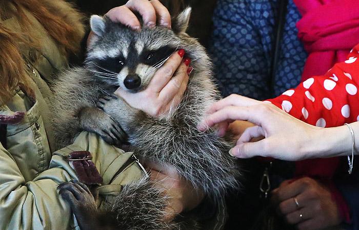 Народные избранники Госдумы готовятся принять закон озащите животных— Контактные зоопарки запретят