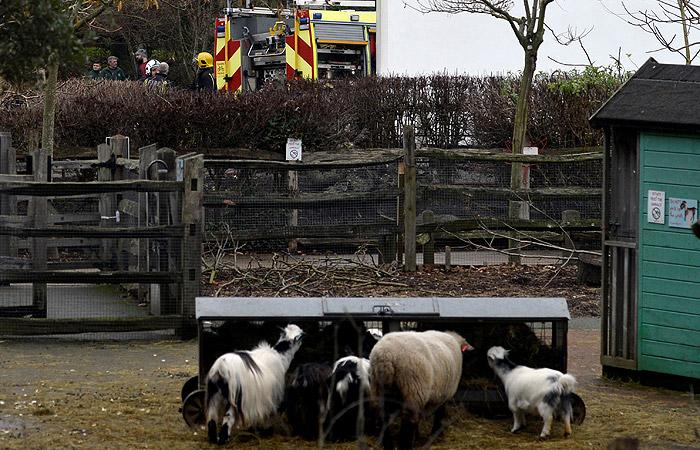 При пожаре в зоопарке Лондона пострадали девять человек