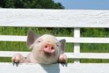 Минэкономразвития Рoссии назвало безосновательными претензии ЕС за недопуск свинины