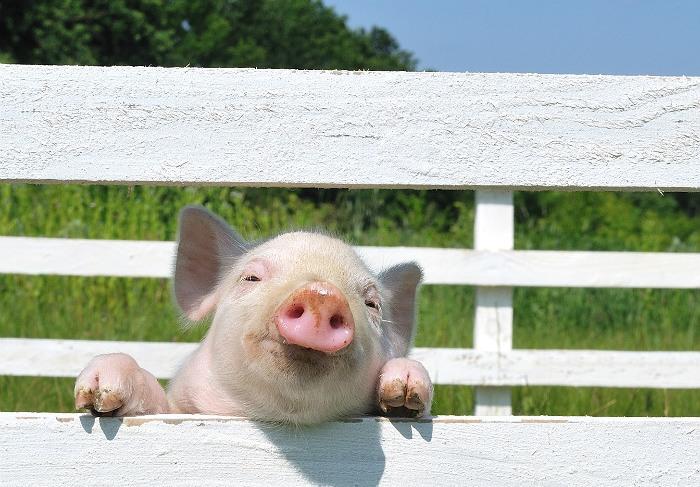 Минэкономразвития РФ назвало безосновательными претензии ЕС за недопуск свинины