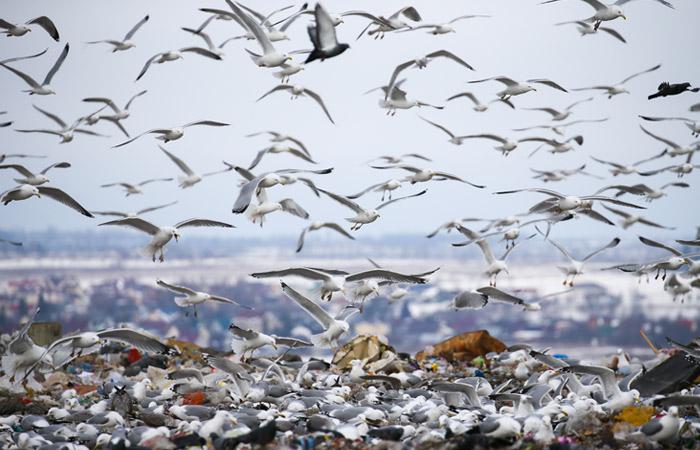 """Правительство одобрило строительство """"мусорных"""" электростанций на Кубани и в Ставрополье"""