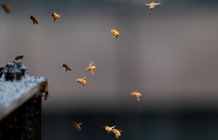 """Пассажиров рейса во """"Внуково"""" эвакуировали из самолета после нападения пчел"""