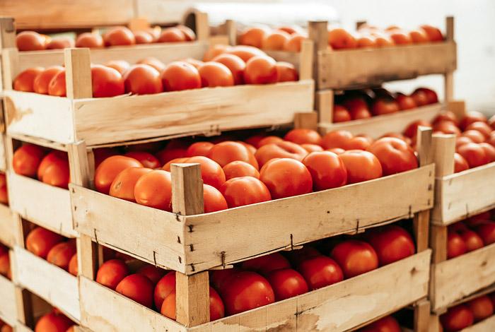 С 1 мая разрешено ввозить в РФ томаты из Турции без ограничений по предприятиям