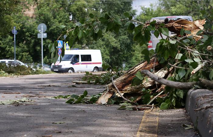 В Москве шесть человек пострадали при падении деревьев из-за ветра