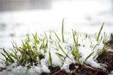 В первый день лета в Поволжье пошел снег
