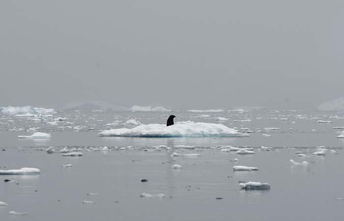Скорость таяния льдов в Антарктике выросла до рекордного уровня