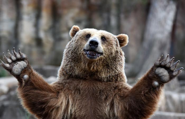 ФСБ предложила считать медведей стратегически важными ресурсами России