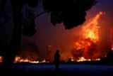 В результате лесных пожаров в пригороде Афин погибли три человека