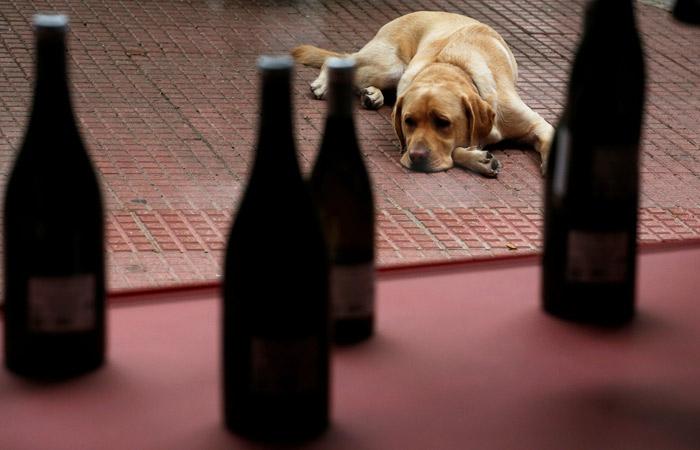 За последние пять лет россияне стали вдвое меньше пить