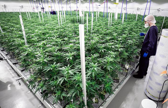 В Канаде началась легальная продажа марихуаны для получения удовольствия