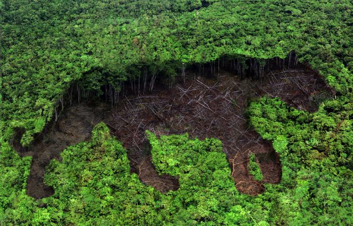 С 1970-х годов человечество уничтожило 60% животных на планете