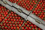 Помидоры и огурцы назвали решающим фактором для таргета по инфляции в РФ
