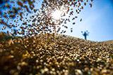Из российского госфонда украли 19 тысяч тонн зерна