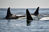 """Суд в Приморье арестовал содержащихся в """"китовой тюрьме"""" косаток, чтобы их не вывезли"""