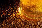 В РФ предупредили об изменении вкуса и качества пива