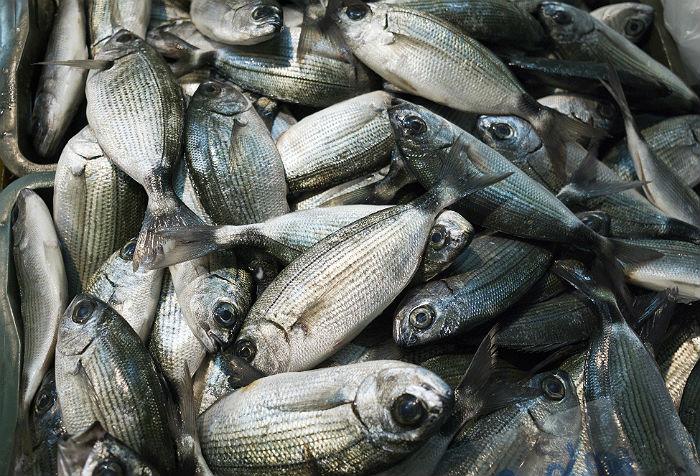 В России зафиксирован рекордный с 1992 года вылов рыбы