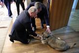 Вучич подарил Путину щенка шарпланинской овчарки