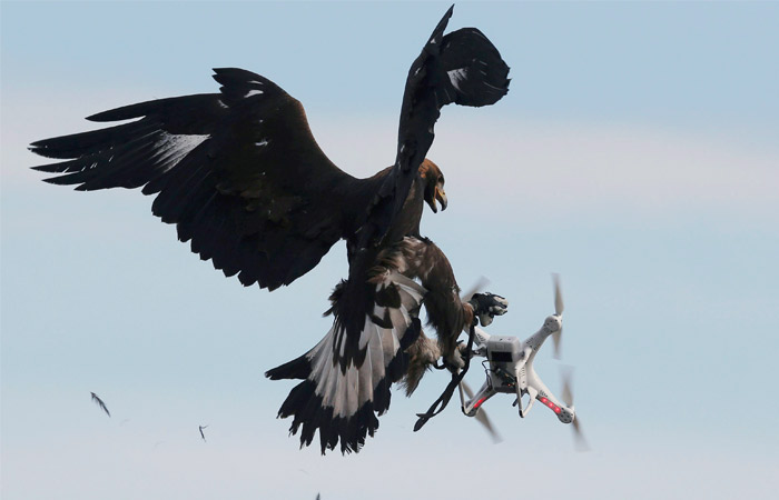 Госдума предложила сбивать дроны, запущенные над митингами