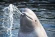 Президент РФ Владимир Путин 22 февраля поручил Минприроды совместно с Минсельхозом и заинтересованными научными и общественными организациями до 1 марта 2019 года определить дальнейшую судьбу китов, содержащихся в бухте Средней