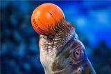 Минкульт разработал правила содержания животных в зоопарках, цирках и дельфинариях