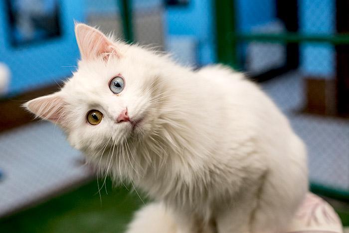 Первая в мире вакцина от аллергии на кошек может появиться уже в этом году