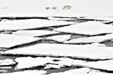 Подкомиссия ООН признала часть территории Арктики продолжением континентального шельфа РФ