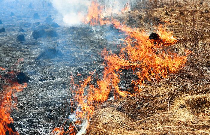 Пожар в Забайкалье уничтожил 109 домов