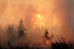 """Космодром """"Восточный"""" оказался под угрозой природного пожара"""