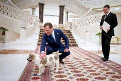 Президент Туркменистана подарил Медведеву щенка алабая