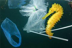 Роспотребнадзор предложил запретить пластиковые пакеты и уничтожение продуктов