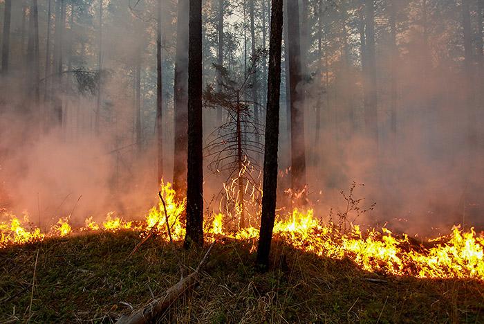 Площадь лесного пожара на юго-востоке Подмосковья выросла до 80 га