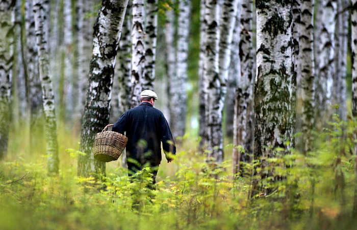 Минсельхоз пообещал не ограничивать сбор грибов и ягод