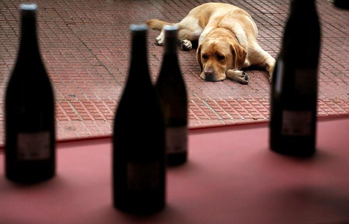 Правительство предложило значительно повысить акциз на вино