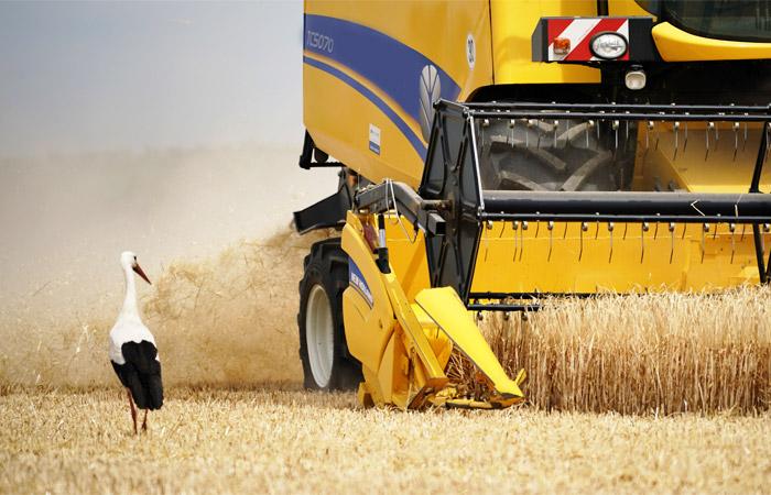 Зерновой союз отказался от прогноза рекордного сбора зерна в РФ в 2019 году