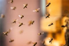 Эксперт оценил в триллион рублей ущерб экономике от массовой гибели пчел
