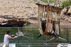 """В Охотское море выпустили еще трех косаток из """"китовой тюрьмы"""""""