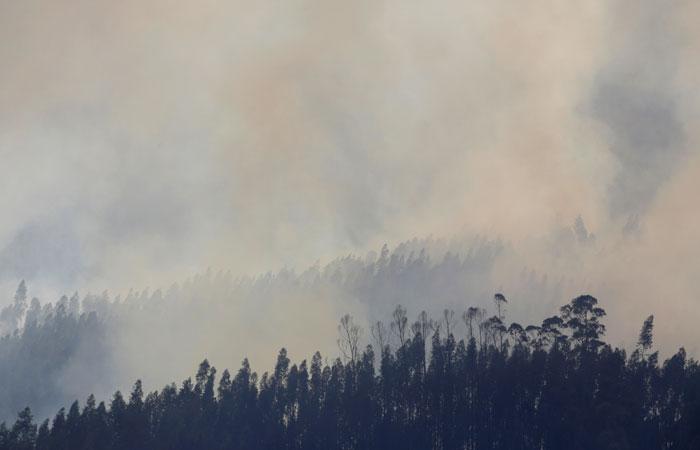 Петиция за введение ЧС в Сибири из-за пожаров собрала более 345 тыс. подписей