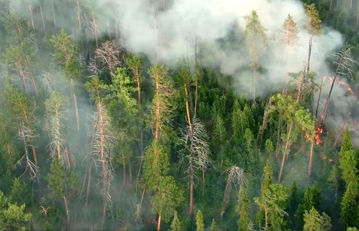 Восстановление сгоревших в Сибири лесов займет больше ста лет