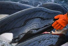 """Всех косаток из """"китовой тюрьмы"""" пообещали отпустить в море к 1 сентября"""