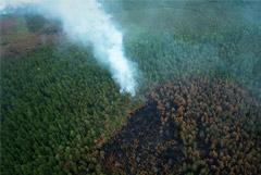 Площадь лесных пожаров в России увеличилась за сутки на 14 тысяч га