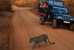 Туристы начали возвращаться на Шри-Ланку после апрельских терактов