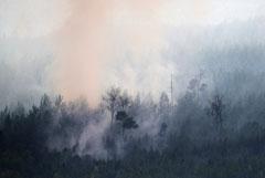 Площадь лесных пожаров в России за сутки увеличилась на 23 тысячи га
