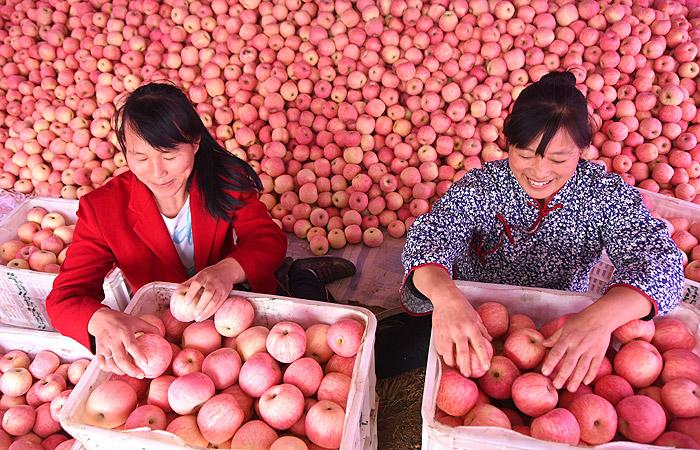 Россия с 10 августа запретила ввоз плодовых культур из Китая