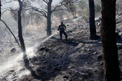 В Греции остановили угрожавший Афинам лесной пожар