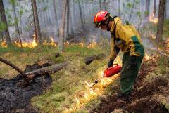 Площадь лесных пожаров в Сибири за сутки сократилась на 10 тыс. гектаров